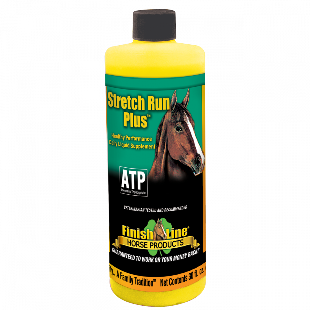 stretch run - healthy energy for horses